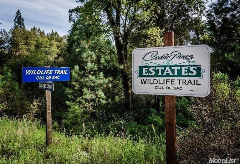 29-B Wildlife Trail - Photo 1