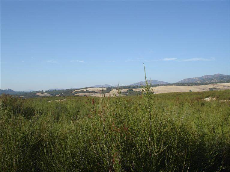 10 Piney Creek Road - Photo 1