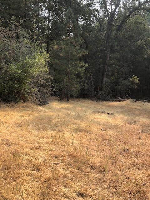 0 Cedar Pines Drive, Fiddletown, CA 95629 (MLS #20055992) :: Keller Williams Realty