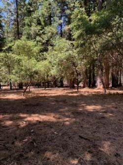 20181 Prairie Drive, Volcano, CA 95689 (MLS #20058232) :: The MacDonald Group at PMZ Real Estate
