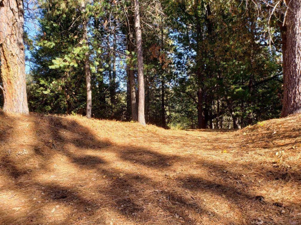 1812 Sandalwood Dr - Photo 1