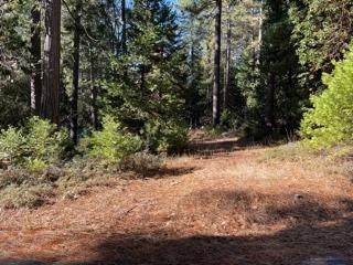 23882 Meadow Crest Drive, Pioneer, CA 95666 (MLS #20076597) :: Paul Lopez Real Estate