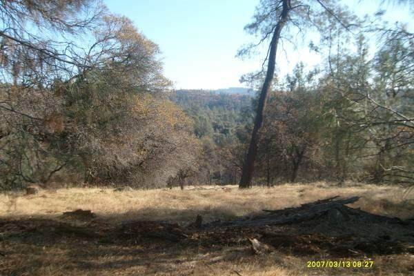 19884 Applejack Drive, Grass Valley, CA 95949 (MLS #20077864) :: Dominic Brandon and Team