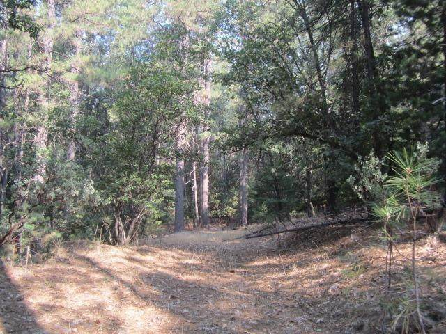 3792 Stope Drive, Placerville, CA 95667 (#221001064) :: The Lucas Group