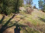 0 Spring Street, Placerville, CA 95667 (MLS #221011927) :: eXp Realty of California Inc