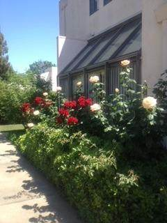 909 Alvarado Avenue #24, Davis, CA 95616 (MLS #221023287) :: eXp Realty of California Inc