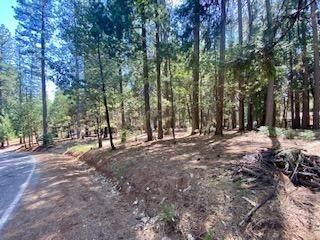 16931 Mckenzie Drive, Pioneer, CA 95666 (MLS #221040041) :: 3 Step Realty Group