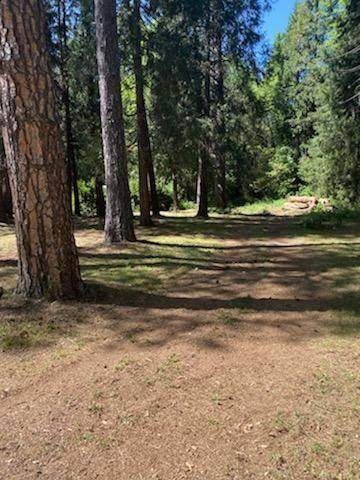 13397 Gracie Road, Nevada City, CA 95959 (MLS #221052635) :: The Merlino Home Team
