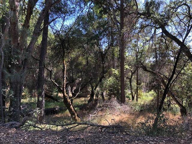 3000 Dyer Way, Placerville, CA 95667 (MLS #221065324) :: REMAX Executive