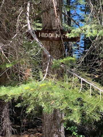 3000 Hidden Court, La Porte, CA 95981 (MLS #221071440) :: Heidi Phong Real Estate Team