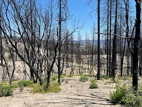 0 Indian Cemetery Road, Berry Creek, CA 95916 (MLS #221074504) :: Heather Barrios