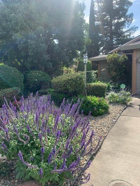 7487 Summerwind Way, Sacramento, CA 95831 (MLS #221133983) :: Heather Barrios