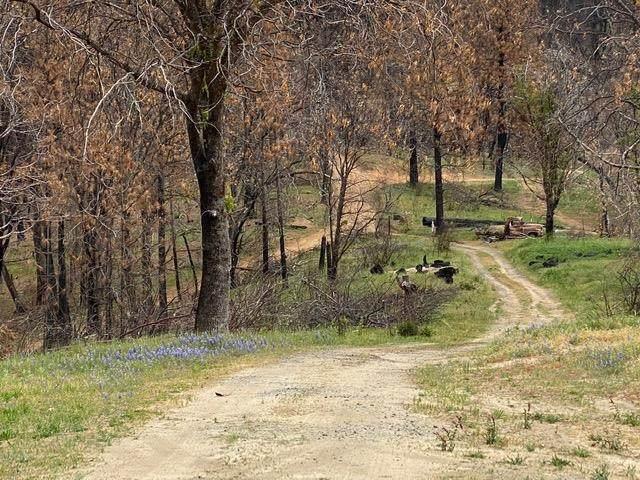 0 Long Point Road, Feather Falls, CA 95940 (MLS #221044414) :: Deb Brittan Team