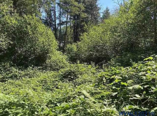 34 N Labsch, Otis, OR 97368 (MLS #782875) :: Oregon Farm & Home Brokers