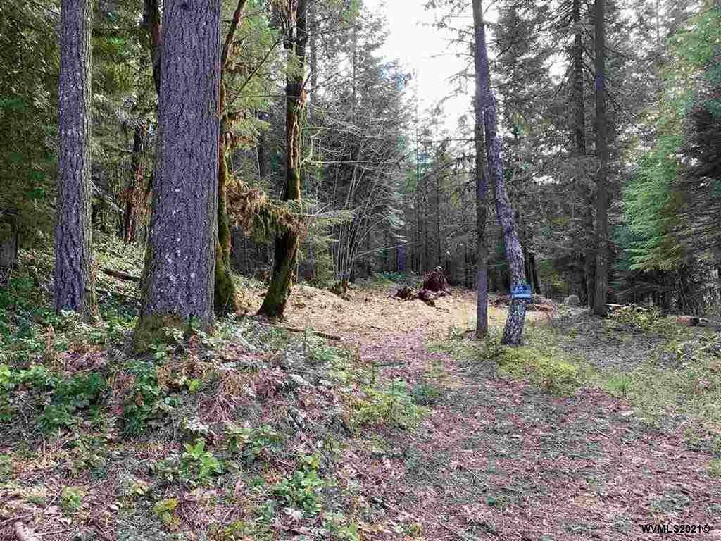 270 Cedar - Photo 1