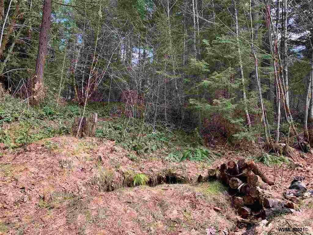 260 Cedar - Photo 1