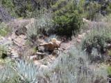 35950 Grapevine Canyon Rd. - Photo 19