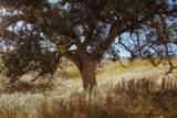 25228 Mesa Grande Rd. - Photo 22