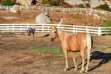 1473 Santa Fe Hills Drive - Photo 34