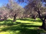 4 Manzana - Photo 4