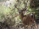 14011 Stephens Canyon Road - Photo 21
