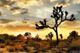 3300 Yucca Mesa - Photo 2