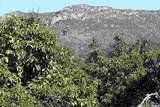 0 Couser Canyon - Photo 16