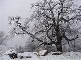 37101 Sundance Drive - Photo 19