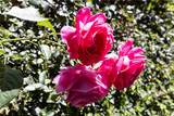 25 Peach Blossom - Photo 14