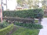 13926 Ramhurst Drive - Photo 6