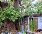 501 Quail Gardens Drive - Photo 8
