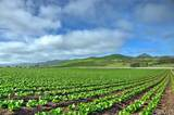 7515 Los Osos Valley Road - Photo 2