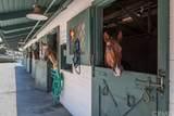 4002 Calle Sonora - Photo 47