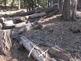 7245 Yosemite Park - Photo 5