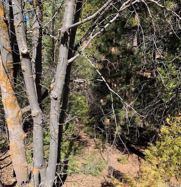 180 Grass Valley, Lake Arrowhead, CA 92352 (#302442820) :: Cay, Carly & Patrick   Keller Williams