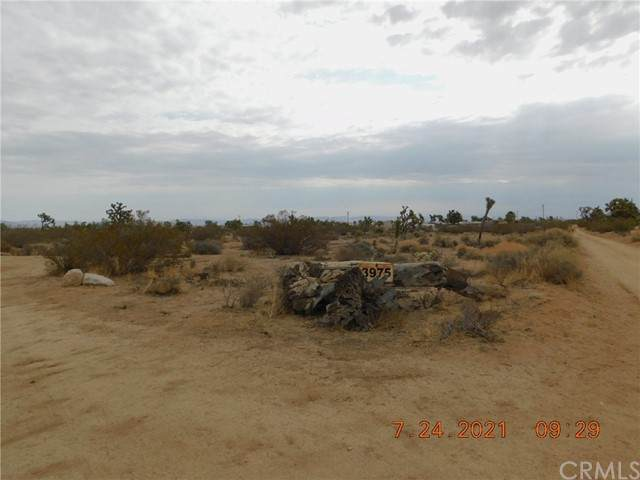 3975 Condalia, Yucca Valley, CA 92284 (#JT21162323) :: SD Luxe Group