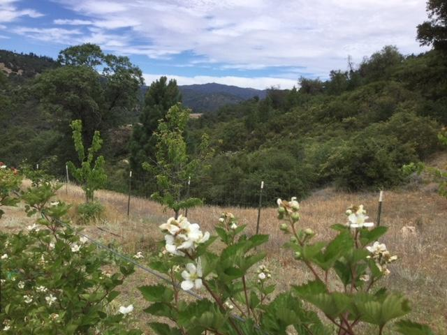 34 Acres Panorama Trail 2A, Palomar Mountain, CA 92060 (#170056948) :: Beachside Realty