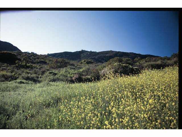 0000 Del Dios #0, Escondido, CA 92029 (#150060588) :: Farland Realty