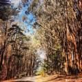 22 Presidio Avenue - Photo 34