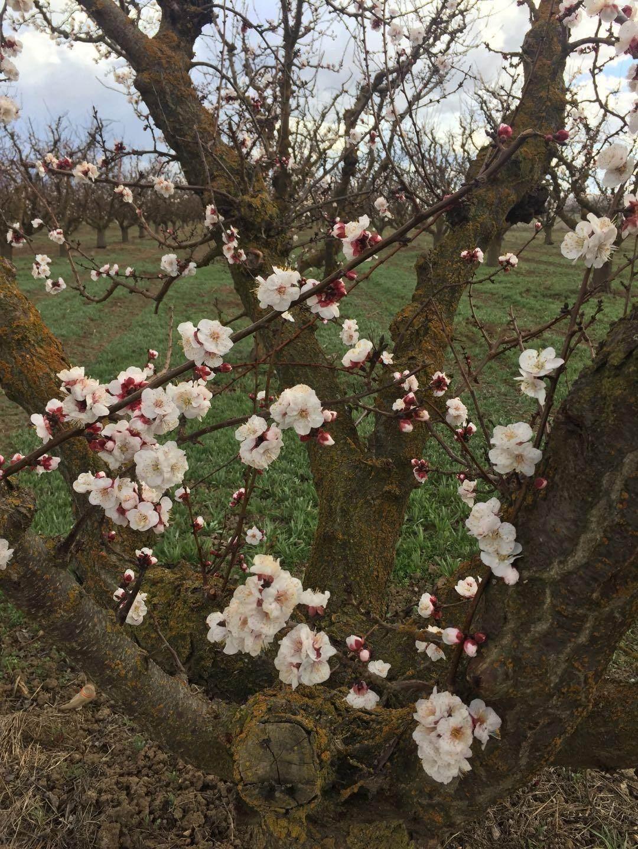 0 Apricot Ave - Photo 1