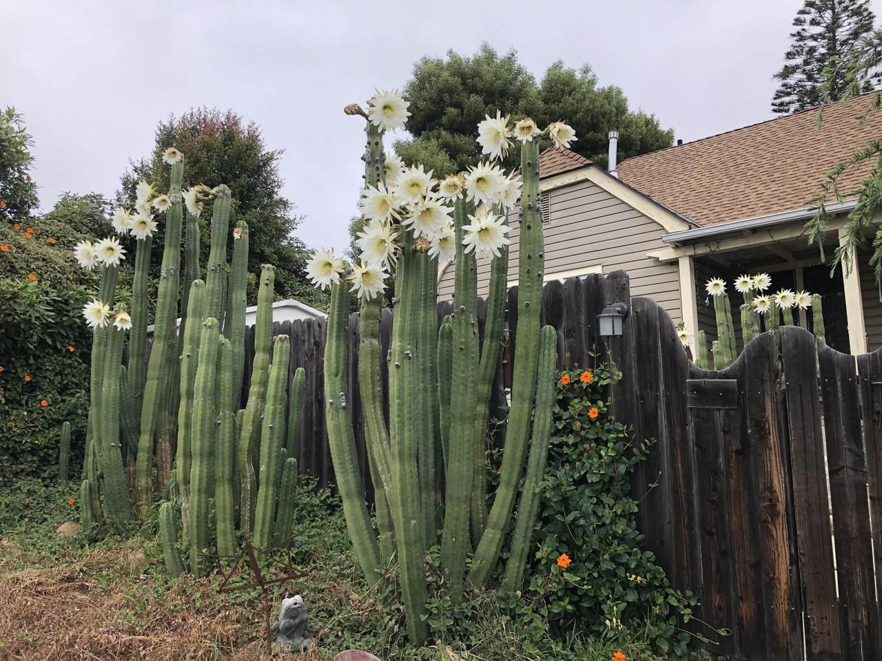119 Salinas - Photo 1