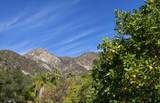 904 Toro Canyon Rd - Photo 24