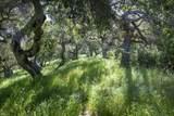 138 Meadows Ln - Photo 25