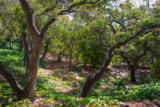 909 Romero Canyon Rd - Photo 13
