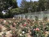 1329 Plaza Pacifica - Photo 11