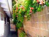 1411 Valerio Street - Photo 10