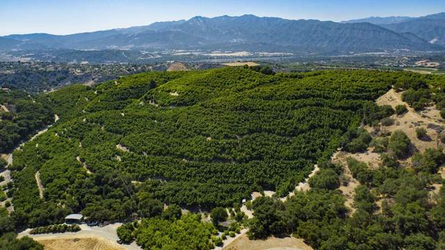 10894 Creek Rd, Ojai, CA 93023 (MLS #21-484) :: The Zia Group