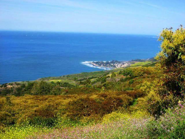 8516 Ocean View Rd, Ventura, CA 93001 (MLS #21-1245) :: The Zia Group
