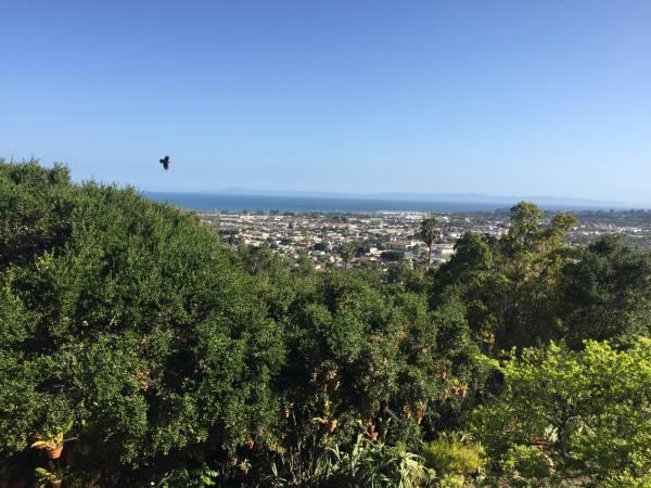 943 Alameda Padre Serra, Santa Barbara, CA 93013 (MLS #RN-14636) :: Chris Gregoire & Chad Beuoy Real Estate