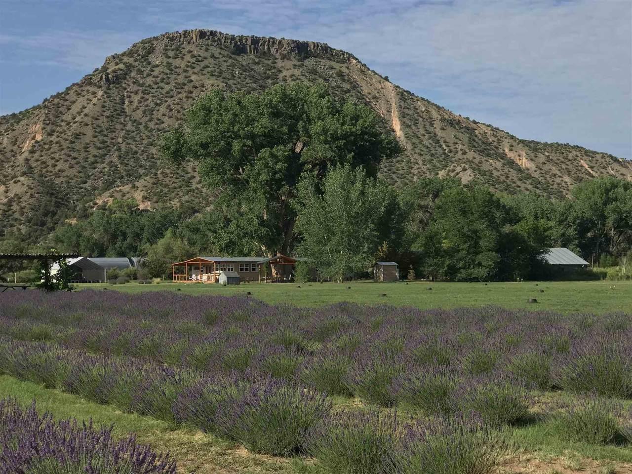 PURPLE Adobe Lavender Farm - Photo 1